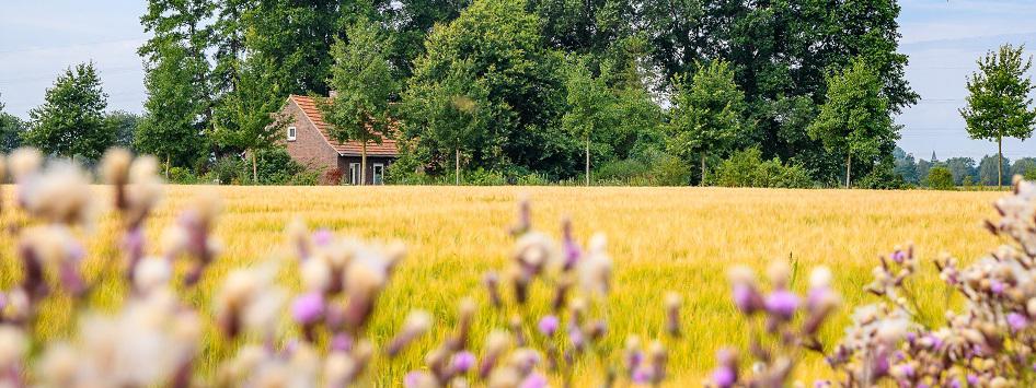 Boerderij achter het korenveld