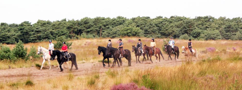 paarden paardrijden ruiters weert kempen broek