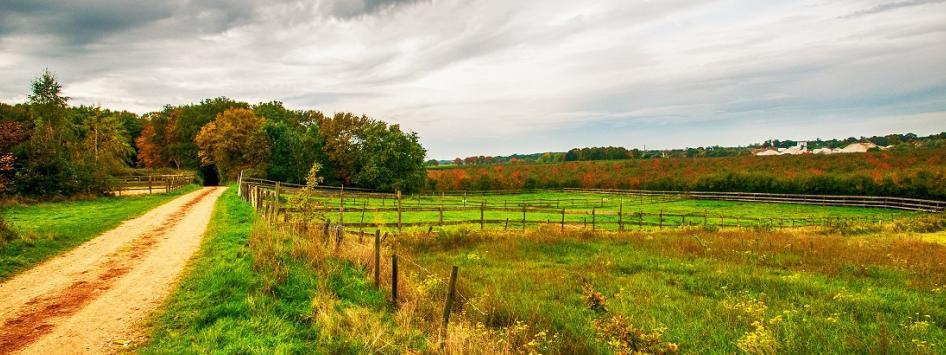 Natuur herfst