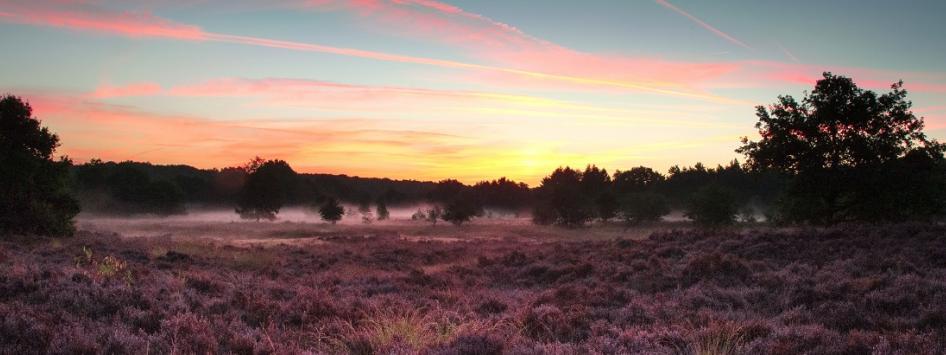 Hei Lavendel Herfst Limburg