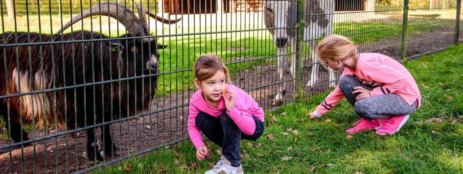 Meisjes voeren de geitjes en de ezels