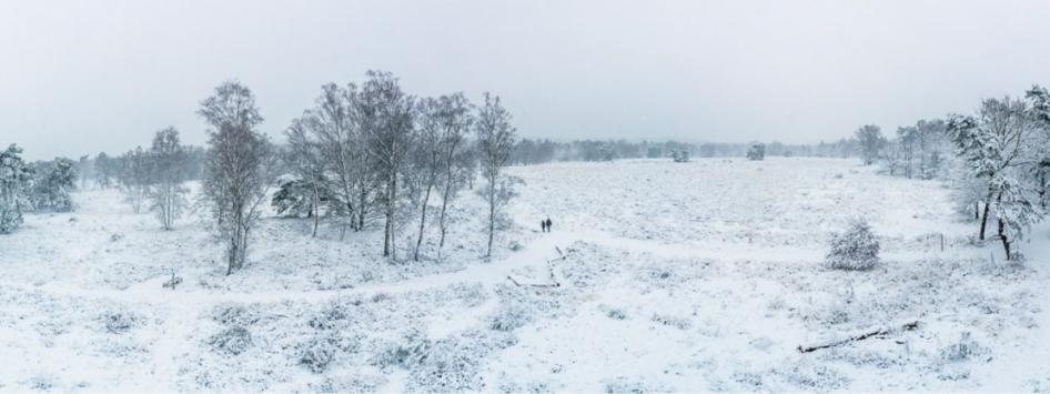 Natuur winter sneeuw